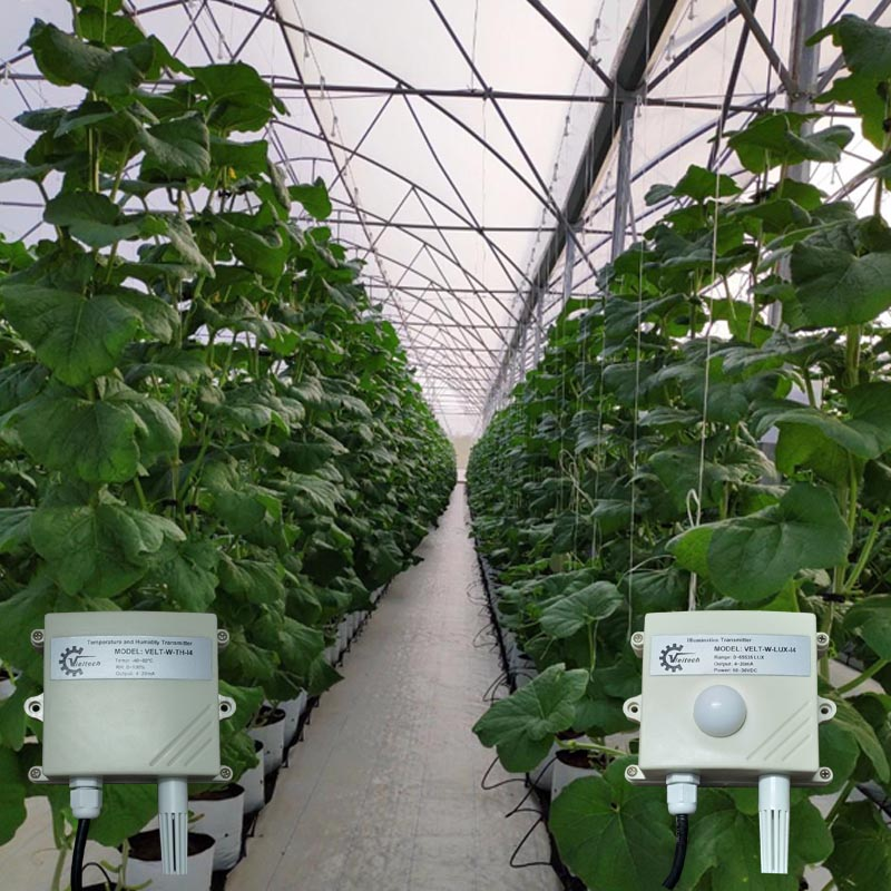 Đo độ ẩm và đo ánh sáng cho một nông trại.